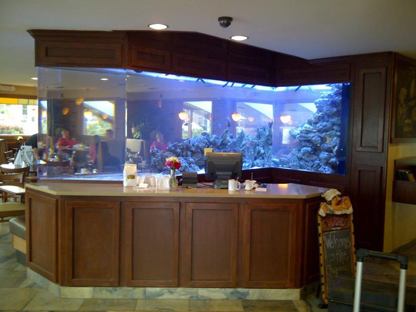 20 gallon aquarium 800 large home aquarium cypress inn. Black Bedroom Furniture Sets. Home Design Ideas